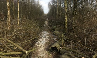 Colliers Moss1