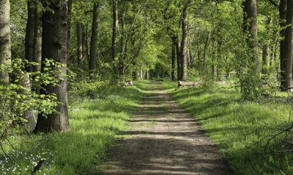 Parks Forests 1