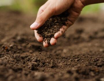 Values Sustainability BVL